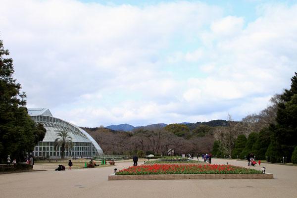 植物園で春の花1_e0048413_19571837.jpg