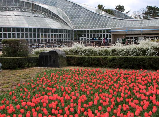 植物園で春の花1_e0048413_19573979.jpg