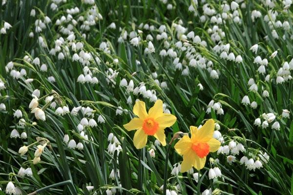 植物園で春の花1_e0048413_19581219.jpg