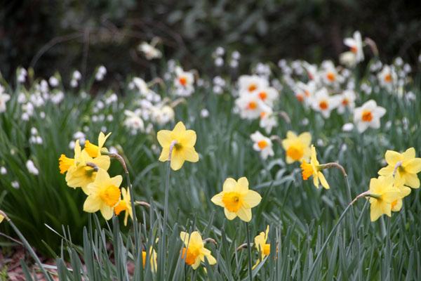 植物園で春の花1_e0048413_1958147.jpg