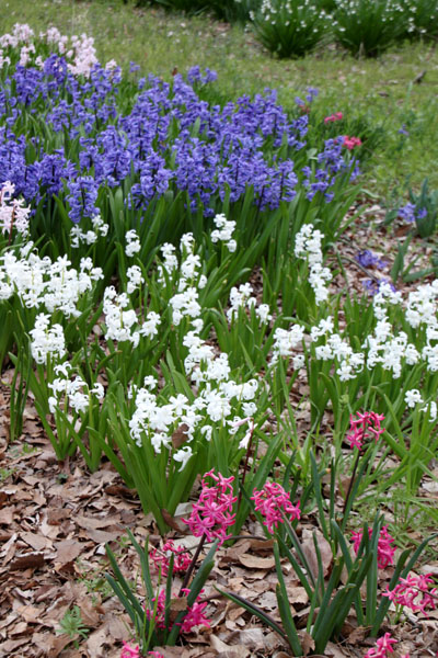 植物園で春の花1_e0048413_19582220.jpg