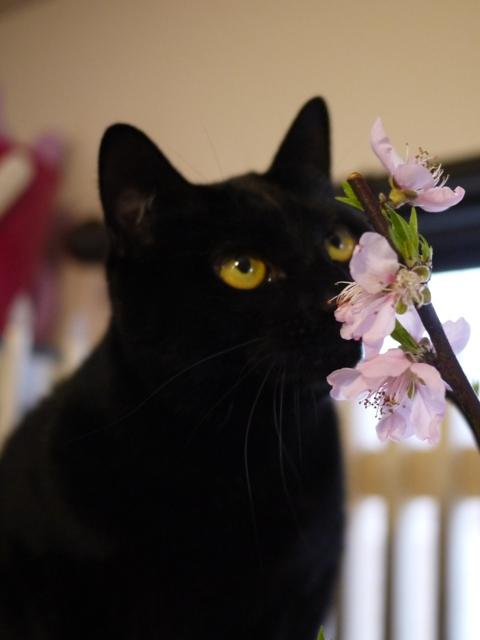 桜猫 てぃぁら編。_a0143140_2256357.jpg