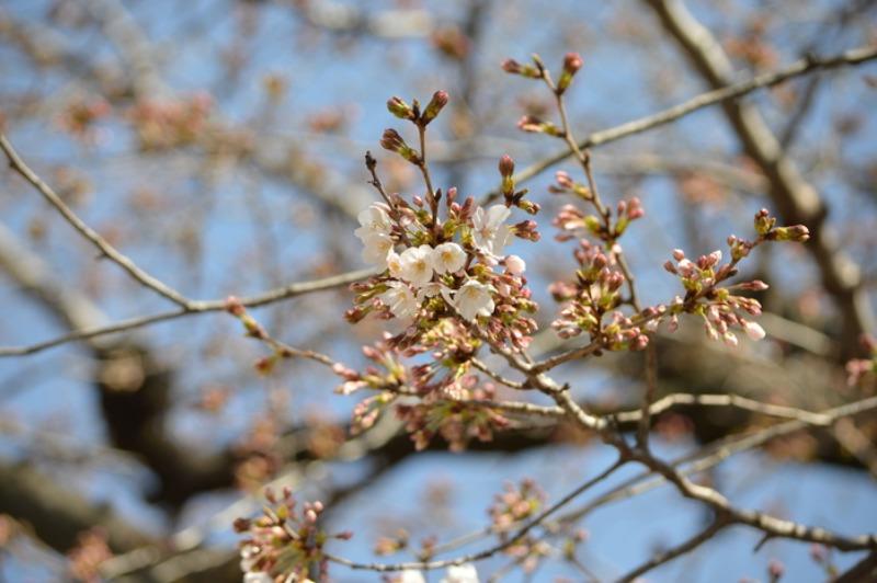モンシロチョウ他 春の花と一緒に_d0254540_19381495.jpg