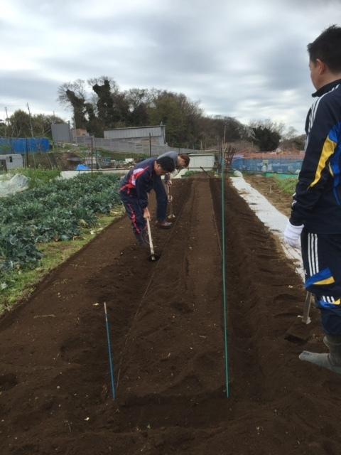 カボチャ&ズッキーニの畝作り &蚕豆の防鳥ネットの準備開始します_c0222448_12174581.jpg
