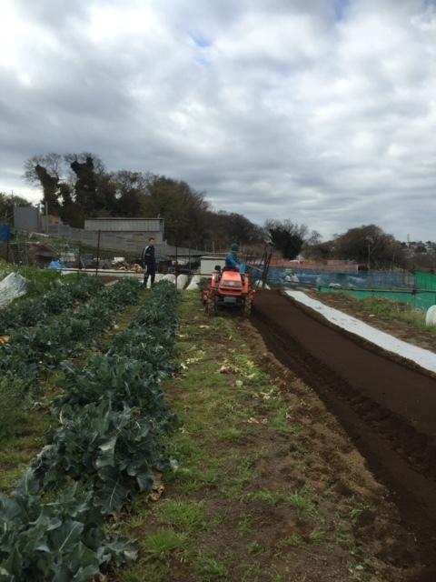 カボチャ&ズッキーニの畝作り &蚕豆の防鳥ネットの準備開始します_c0222448_12180845.jpg