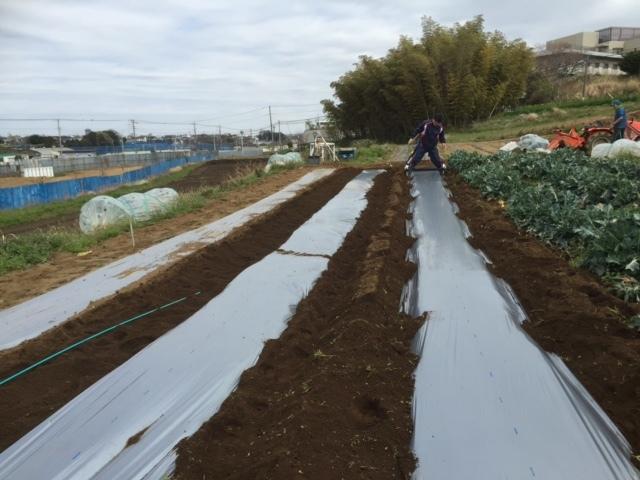 カボチャ&ズッキーニの畝作り &蚕豆の防鳥ネットの準備開始します_c0222448_12183067.jpg