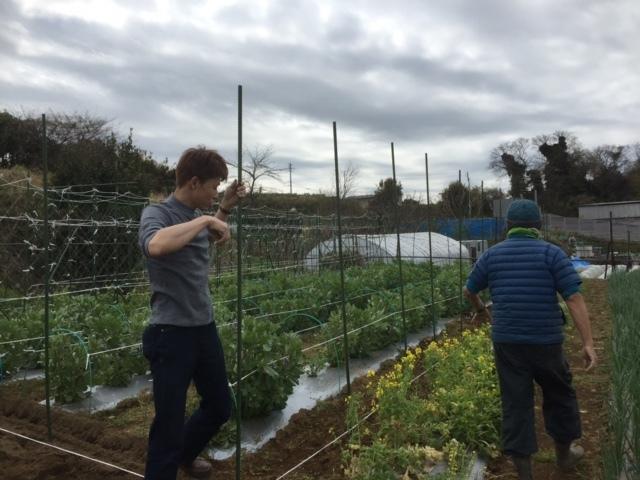 カボチャ&ズッキーニの畝作り &蚕豆の防鳥ネットの準備開始します_c0222448_12341351.jpg
