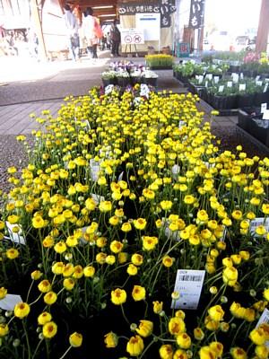 西尾市「憩の農園」出張販売_c0141652_14584127.jpg