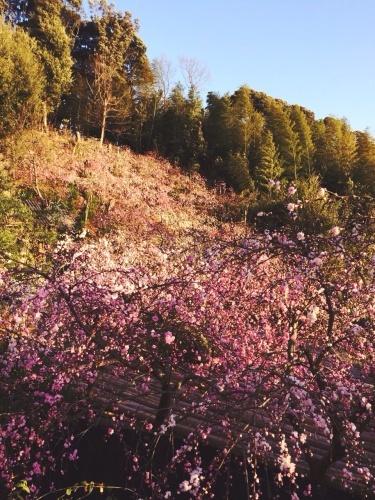 桃の花とケータリング_e0354955_01004604.jpg
