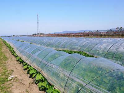 有機栽培の水田ごぼう 元気に成長しています!収穫は4月下旬より!!_a0254656_1720856.jpg