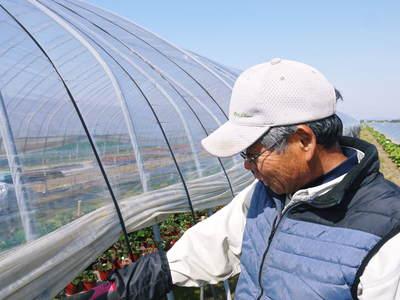有機栽培の水田ごぼう 元気に成長しています!収穫は4月下旬より!!_a0254656_17264029.jpg