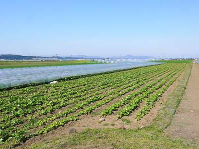 有機栽培の水田ごぼう 元気に成長しています!収穫は4月下旬より!!_a0254656_17561489.jpg