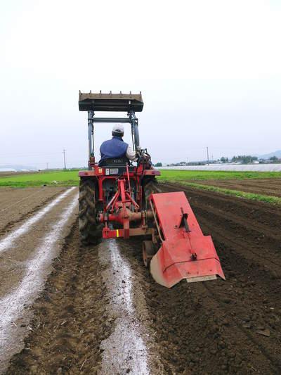 有機栽培の水田ごぼう 元気に成長しています!収穫は4月下旬より!!_a0254656_1821591.jpg