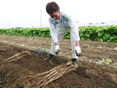 有機栽培の水田ごぼう 元気に成長しています!収穫は4月下旬より!!_a0254656_187548.jpg