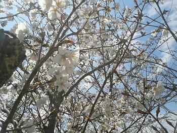 今日はお花見!_e0171669_15551037.jpg
