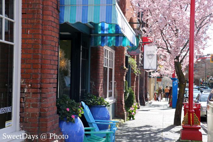 カナダで桜満開!Spring is here in Canada_e0046675_08390946.jpg