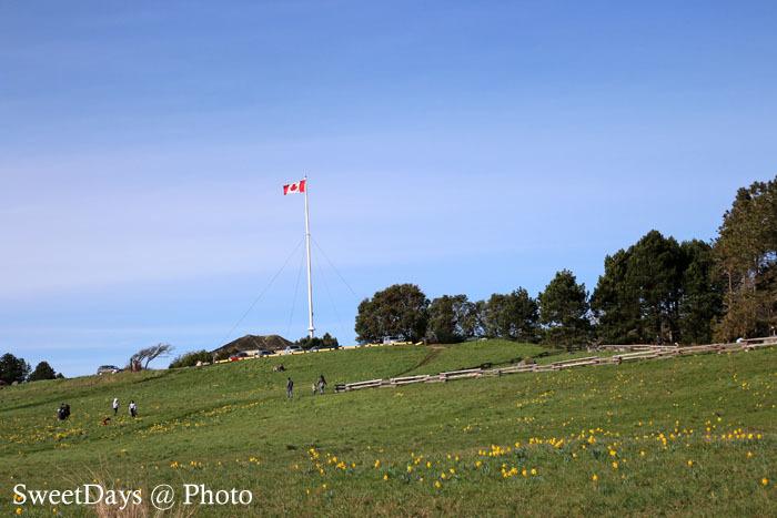 カナダ・ビクトリア〜Spring is here in Victoria_e0046675_08454979.jpg