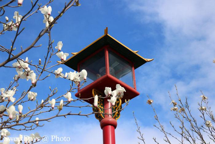 カナダ・ビクトリア〜Spring is here in Victoria_e0046675_08460323.jpg
