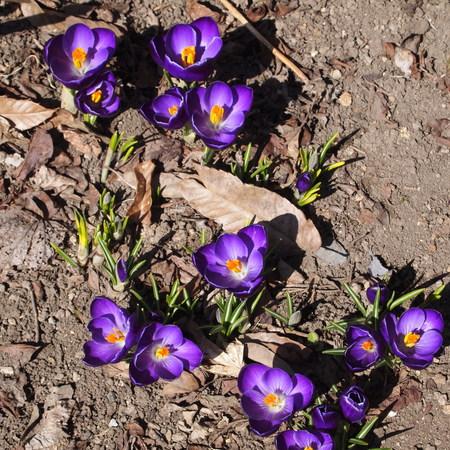 お庭に春が来ていました。_a0292194_2050284.jpg