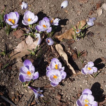 お庭に春が来ていました。_a0292194_20504843.jpg