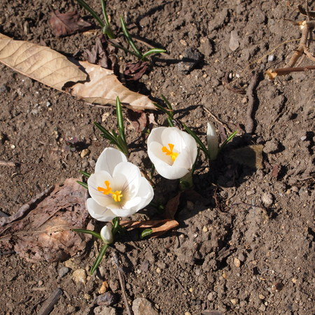 お庭に春が来ていました。_a0292194_2051178.jpg