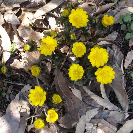 お庭に春が来ていました。_a0292194_2057465.jpg