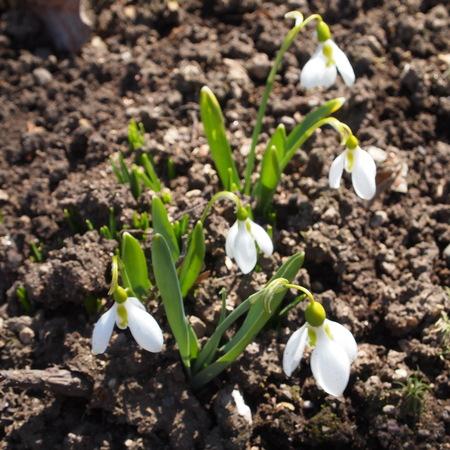 お庭に春が来ていました。_a0292194_20581374.jpg