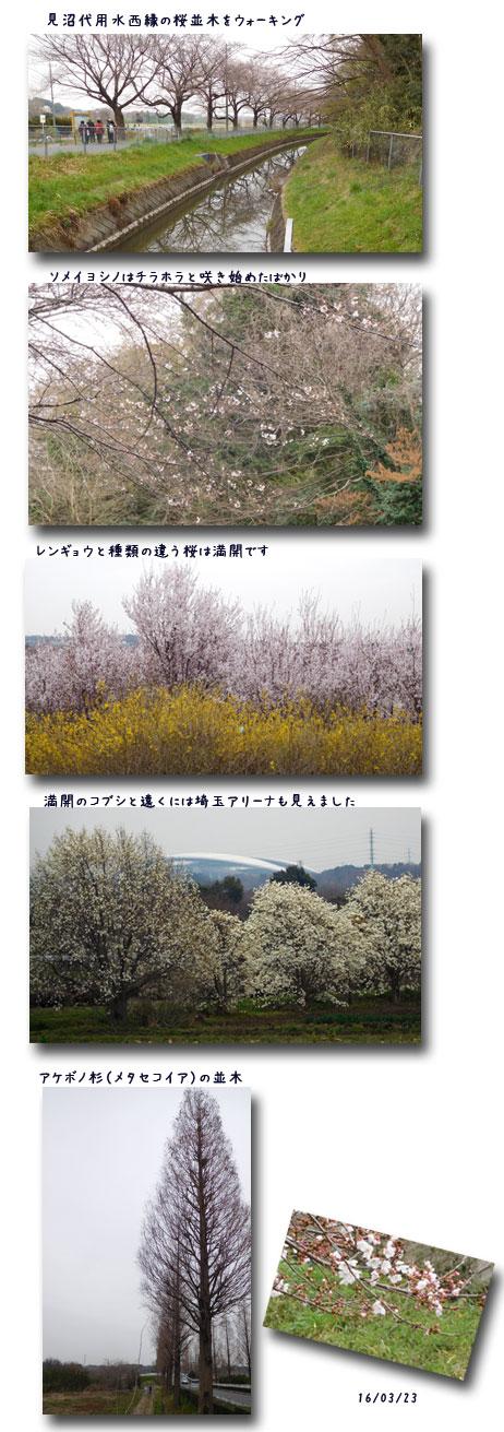 お花見ウォーク (見沼)(黒田清輝展)_c0051105_1201477.jpg