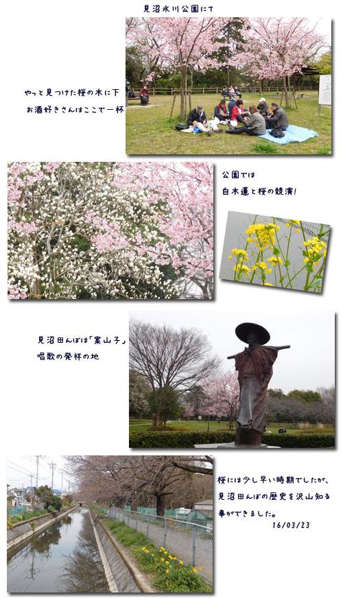 お花見ウォーク (見沼)(黒田清輝展)_c0051105_176285.jpg