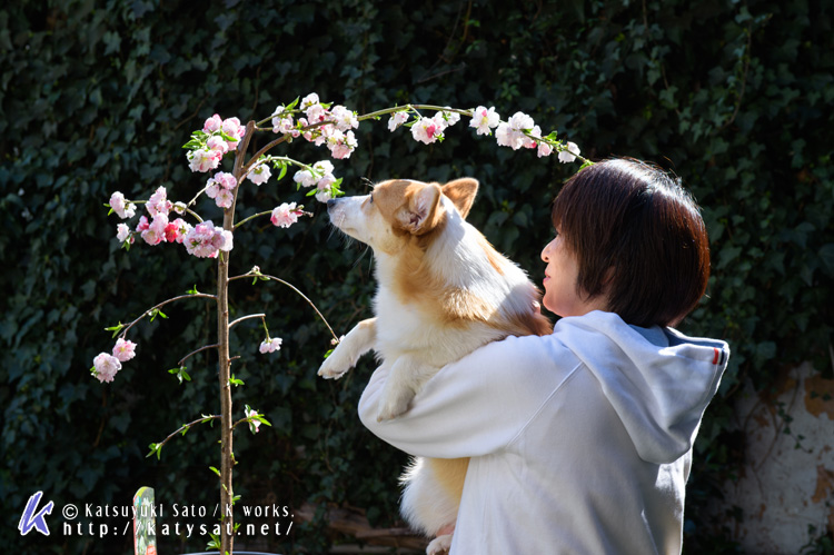 モモちゃんの花桃と_d0102523_22513094.jpg