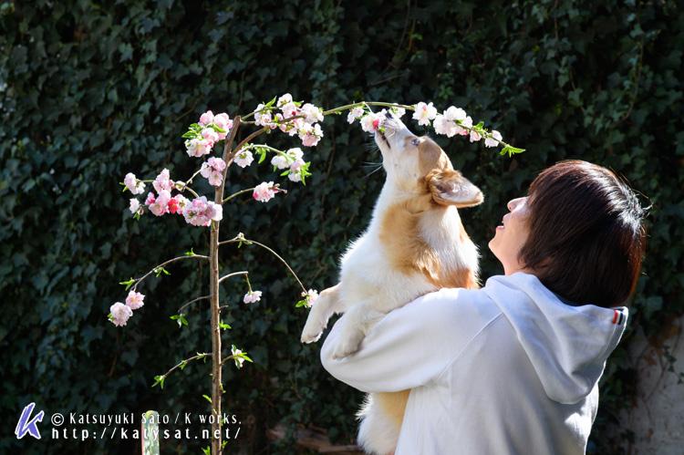モモちゃんの花桃と_d0102523_22515151.jpg