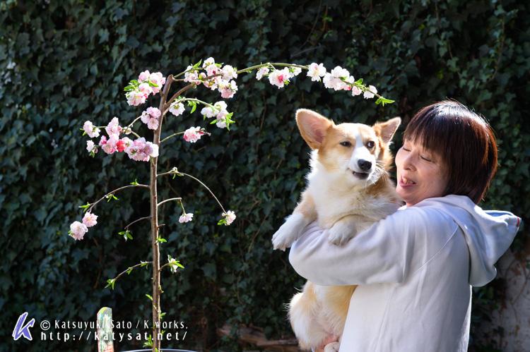 モモちゃんの花桃と_d0102523_22531983.jpg