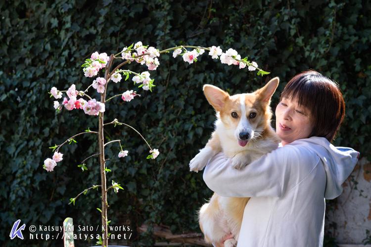 モモちゃんの花桃と_d0102523_2253325.jpg