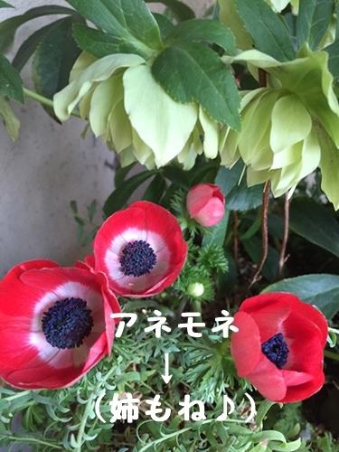 b0119525_15431098.jpg