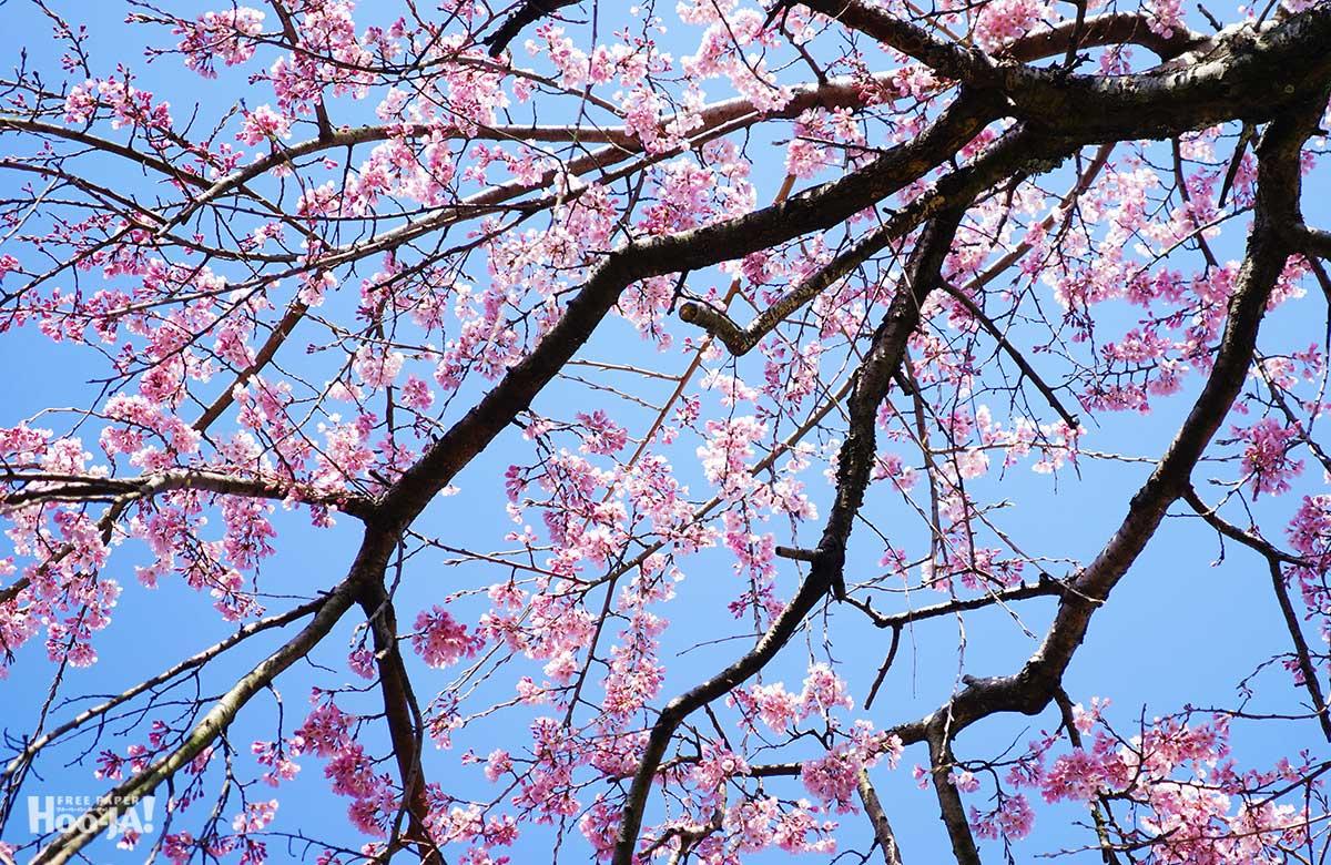 桜の下で逢いましょう_c0136239_057221.jpg