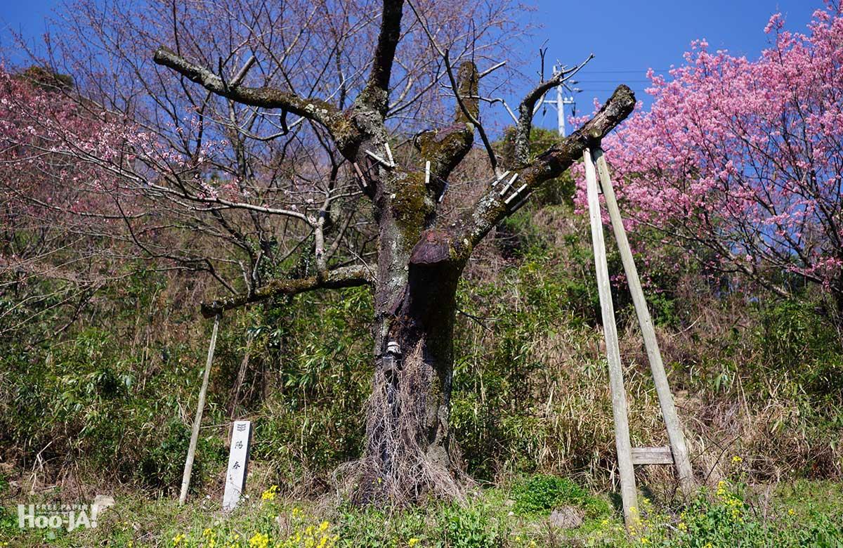 桜の下で逢いましょう_c0136239_105744.jpg