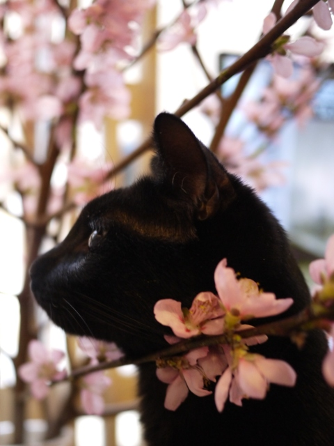 桜猫 ぎゃぉす編。_a0143140_20544183.jpg