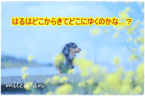 b0115642_1734223.jpg