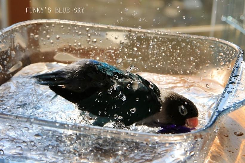 水浴びB.Bの記録 → (2月27日・2月17日・3月4日)_c0145250_15362413.jpg