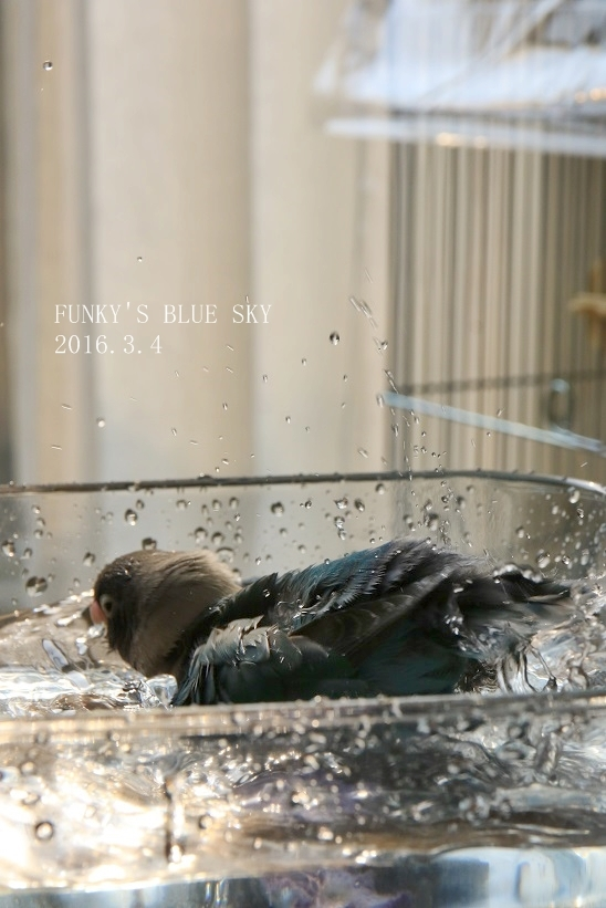 水浴びB.Bの記録 → (2月27日・2月17日・3月4日)_c0145250_15364610.jpg