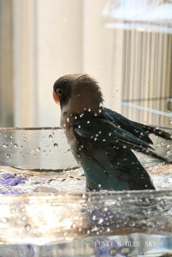 水浴びB.Bの記録 → (2月27日・2月17日・3月4日)_c0145250_15365187.jpg