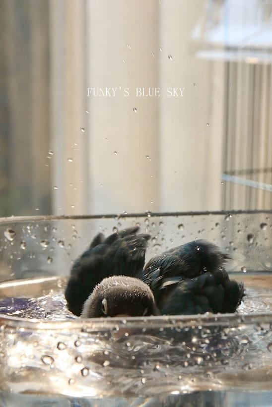 水浴びB.Bの記録 → (2月27日・2月17日・3月4日)_c0145250_15365680.jpg