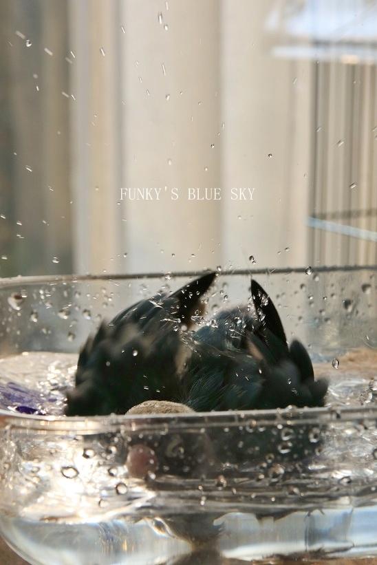 水浴びB.Bの記録 → (2月27日・2月17日・3月4日)_c0145250_15365913.jpg