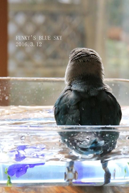 水浴びB.Bの記録 → (2月27日・2月17日・3月4日)_c0145250_15370773.jpg