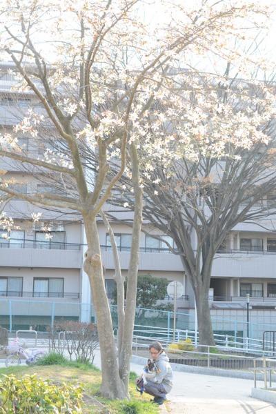 12回目のちょこっと桜(11歳だけどね)_b0307951_17203921.jpg