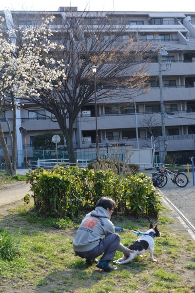 12回目のちょこっと桜(11歳だけどね)_b0307951_17233533.jpg