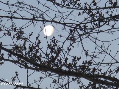 月と桜_e0262651_13125812.jpg