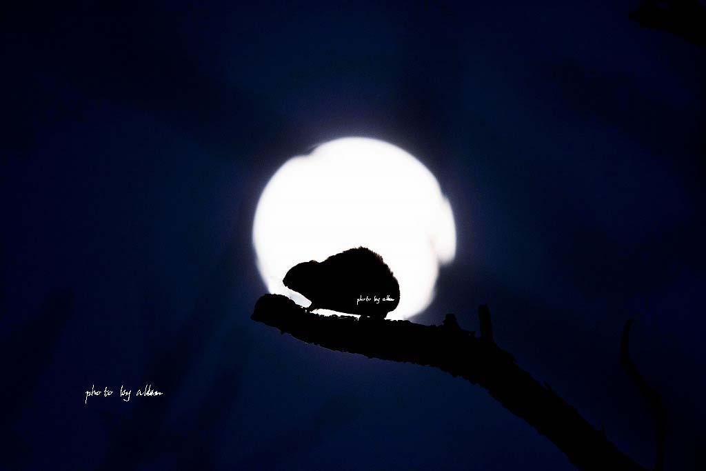 月とモモンガより~_a0039860_1905949.jpg