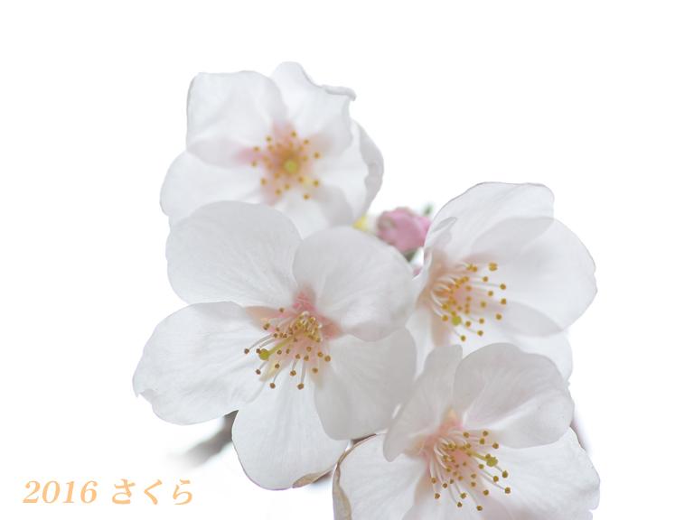 d0251161_15121146.jpg