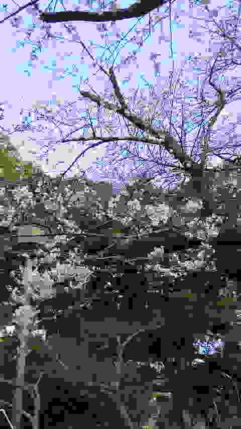 f0193762_16205252.jpg